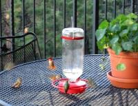 Hummingbirds Abound at Feeders